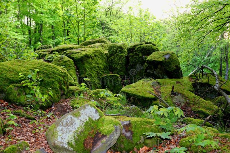 在一件前猎物的青苔长得太大的冰砾飞白岩的 欧登瓦德山地区,德国 免版税图库摄影