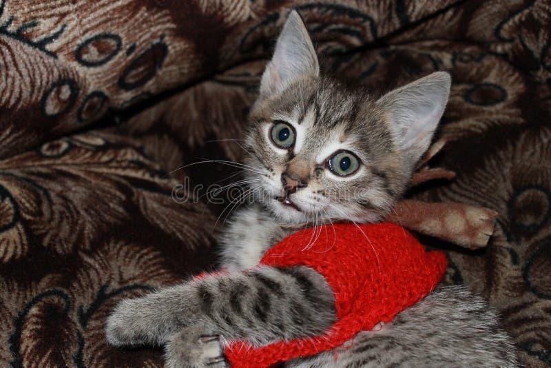 在一件红色夹克的小的小猫 免版税库存图片