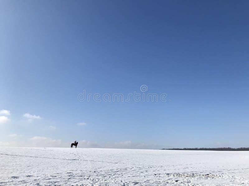 在一匹黑马的孤立车手 免版税库存图片