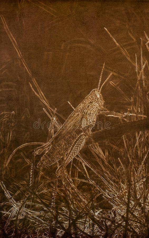 在一华丽的蚂蚱Hesperotettix speciosus的乌贼属的例证在象草的栖所在科罗拉多东部 免版税库存图片