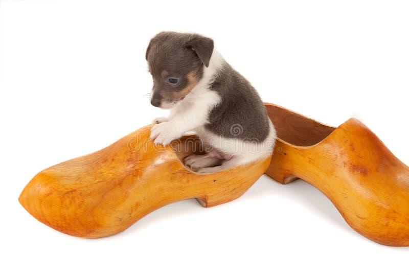 在一双木鞋子的小狗 免版税库存图片