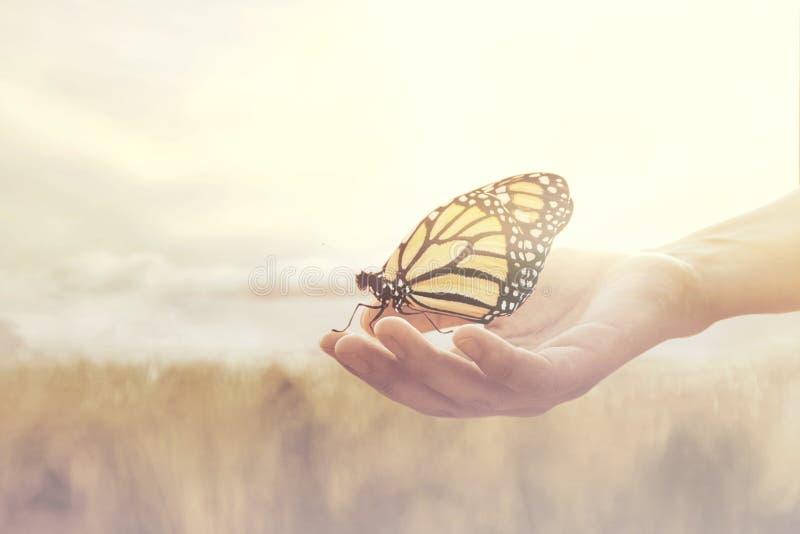 在一只人的手和蝴蝶之间的甜遭遇 库存照片
