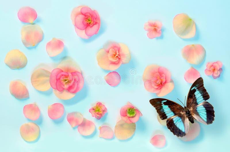 Download 在一只蓝色背景和蝴蝶的美丽的花 库存图片. 图片 包括有 设计, 样式, 颜色, 工厂, 开花, 特写镜头 - 72365273