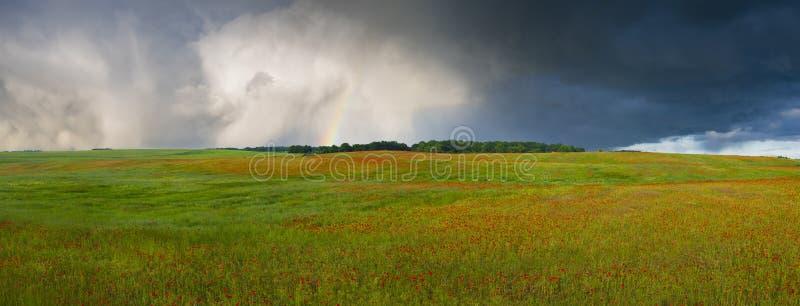 在一场风暴以后的彩虹在红色鸦片草甸  库存照片