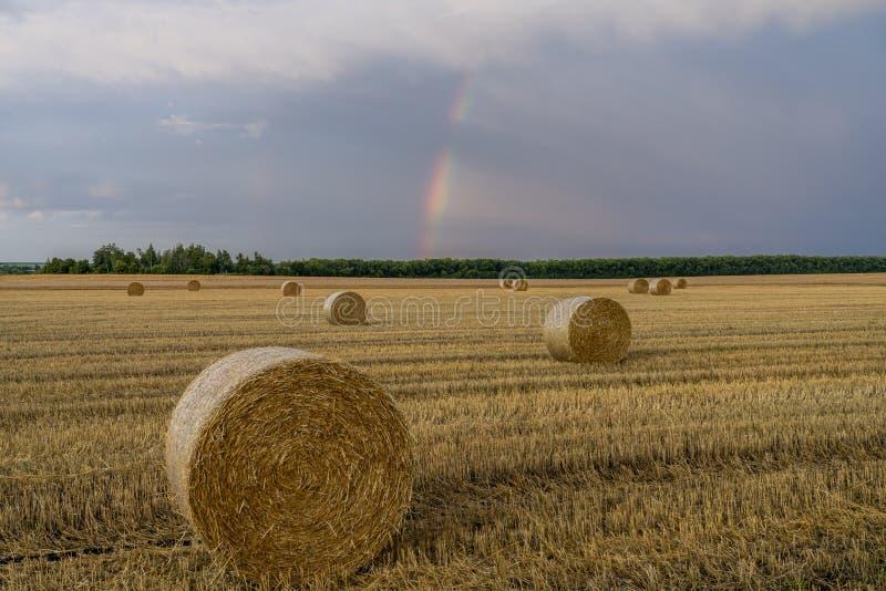 在一块倾斜的麦田的美丽的多彩多姿的彩虹与秸杆大卷  库存照片