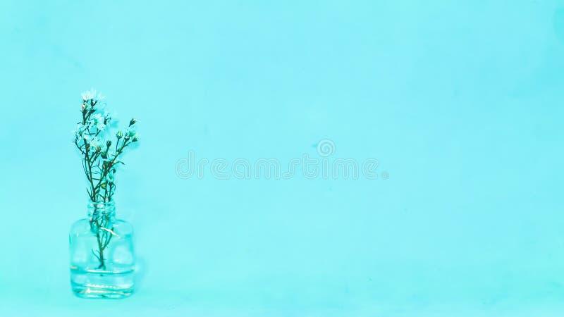 在一块小透明玻璃的白色小花 免版税库存照片