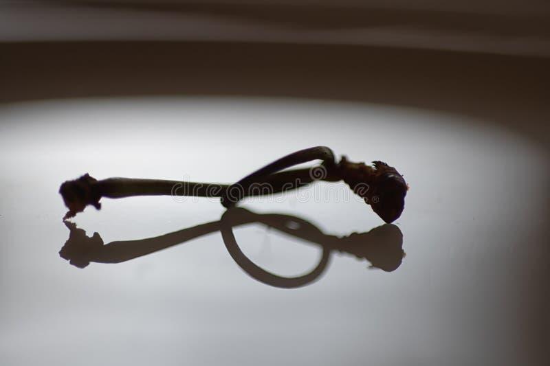 在一块板材的一个结栓的樱桃词根有反射的 免版税库存图片