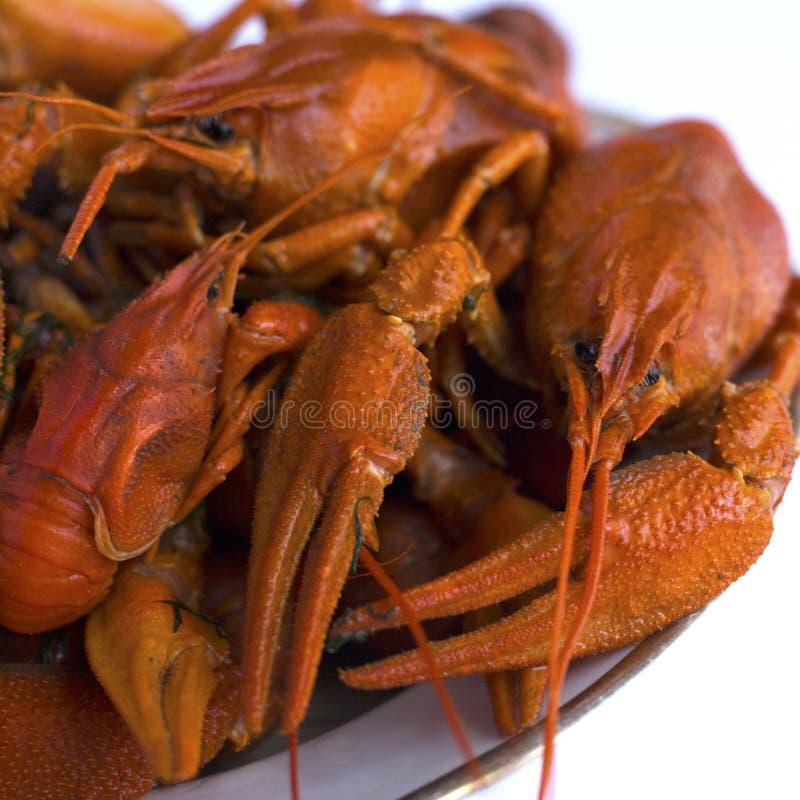 在一块板材的煮熟的红色小龙虾在白色背景 节肢动物家庭的欧洲啤酒纤巧在白色背景的 免版税库存图片