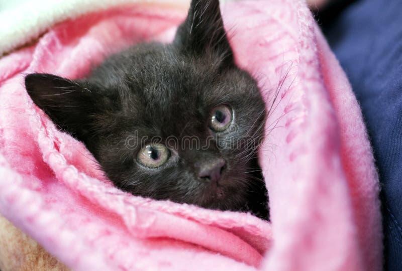 在一块桃红色毛巾包裹的黑小猫 免版税库存照片