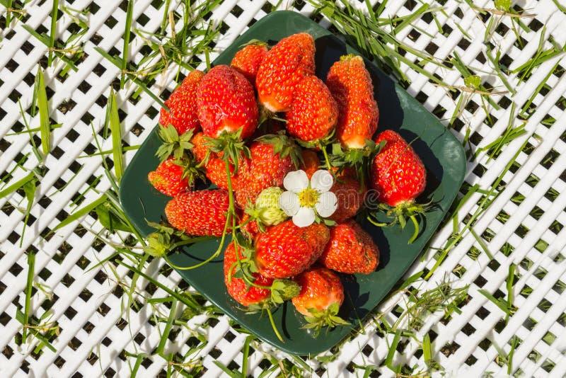 在一块深绿方形的板材的新鲜的莓果草莓 库存照片