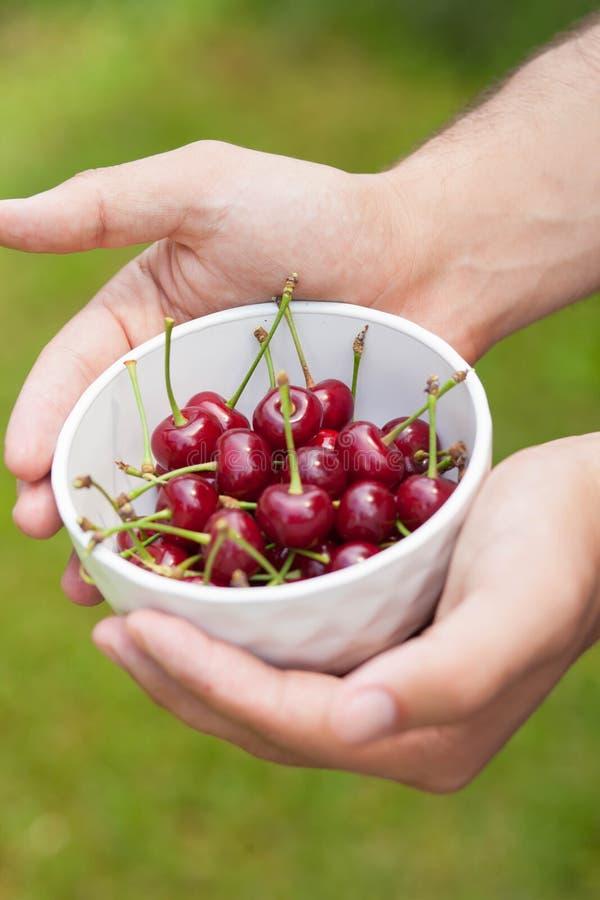 在一块白色板材的成熟樱桃在手中 免版税图库摄影
