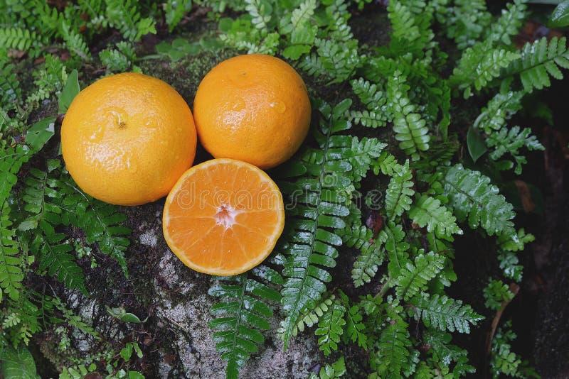 在一块石头的橙色新鲜水果与蕨叶子 库存图片