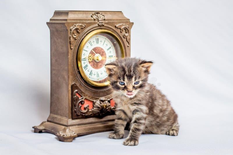 在一块老手表附近的一只小的小猫 它` s时间有breakfast_ 图库摄影