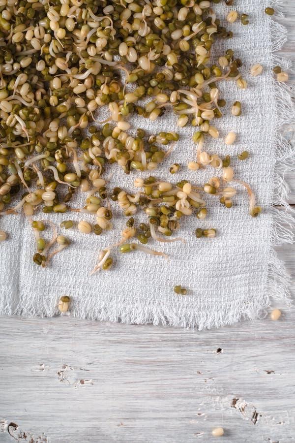 在一块餐巾的发芽的绿豆在左边 图库摄影