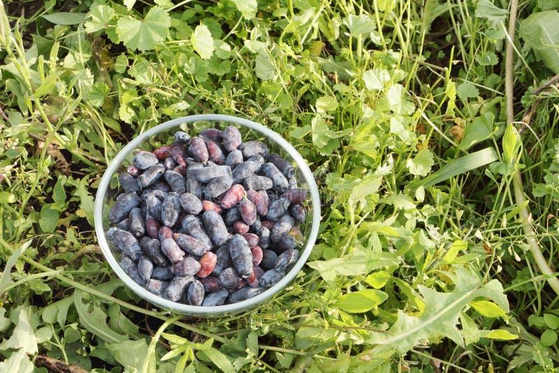 在一块玻璃板的忍冬属植物莓果 免版税图库摄影
