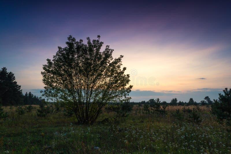 在一夏天夜间的日落 免版税库存图片