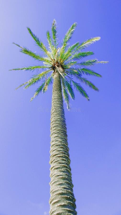 在一天空蔚蓝的艺术性的棕榈 免版税库存照片