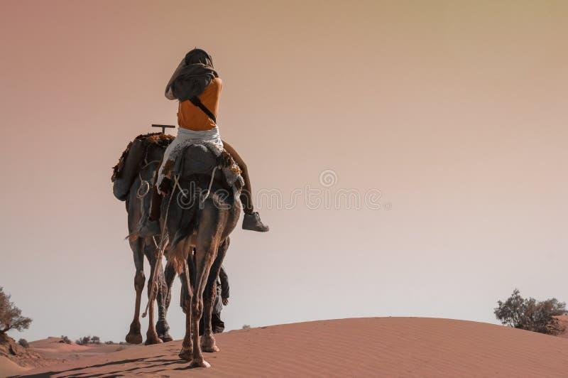 在一头独峰驼的年轻女人骑马在摩洛哥沙子沙漠 库存照片