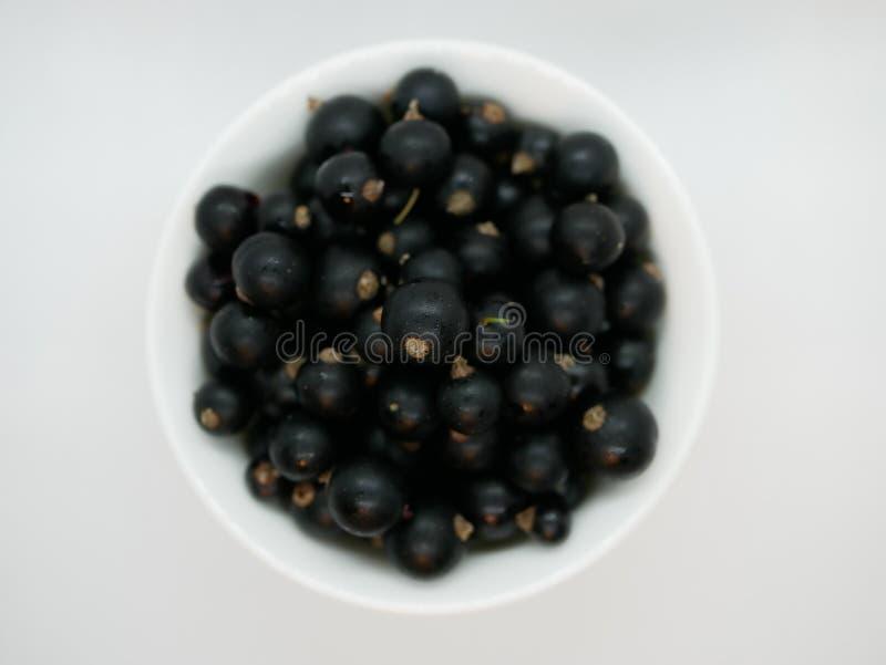 在一小白色杯的成熟黑醋栗莓果在白色背景 黑醋栗收获自然维生素 r veget 库存照片