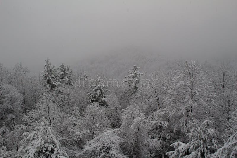 在一座山一边的新鲜的积雪的树在大雪以后猛冲 库存照片