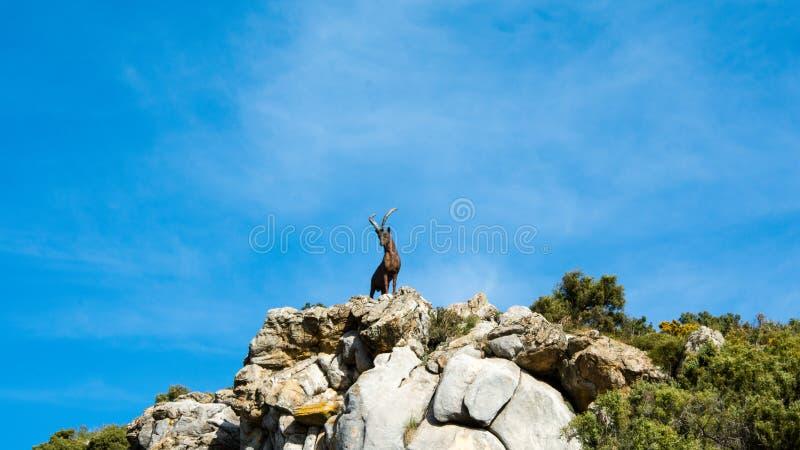 在一座山的山羊雕象在马尔韦利亚 库存照片