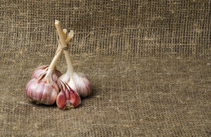 在一张木桌上的有机大蒜在背景中 库存图片