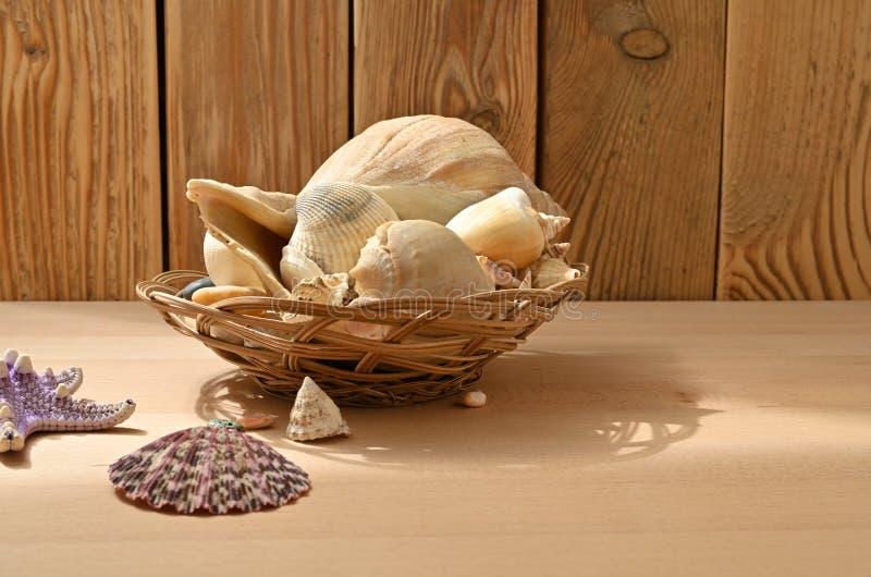 在一张木桌上的贝壳 海软体动物的汇集 免版税库存图片
