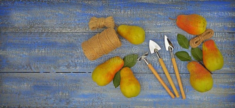 在一张木桌上的水多的梨 结果实有机 健康生活方式 免版税库存照片
