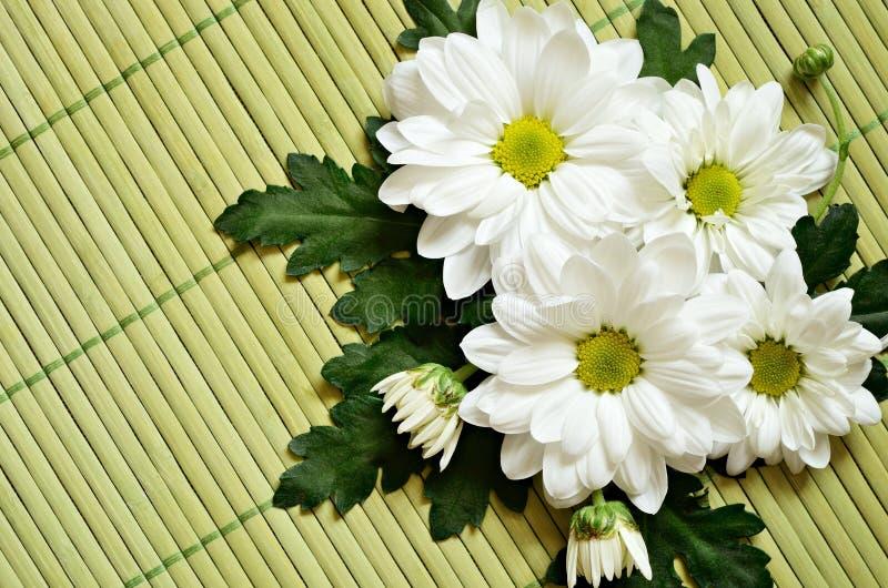 Download 在一张竹席子的春黄菊 库存图片. 图片 包括有 编排者, 开花的, 没人, 波儿地克的, 雏菊, 特写镜头 - 30333785