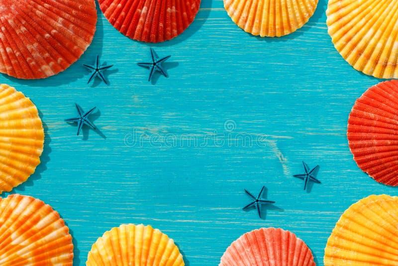 在一张蓝色桌上的红色和橙色贝壳 免版税库存图片