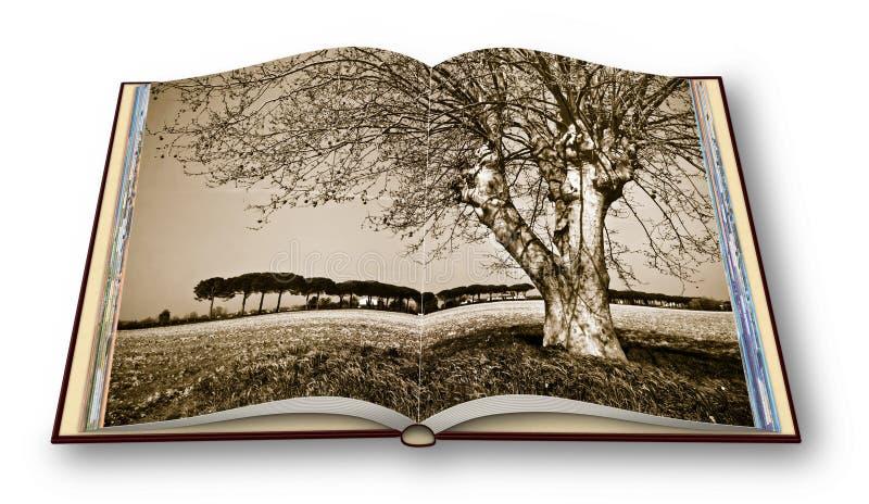 在一托斯坎wheatfield的遥远的树-托斯卡纳-意大利-打开了在白色背景隔绝的photobook -我是版权拥存者 图库摄影