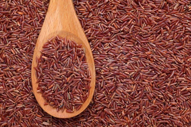 在一把木匙子的红色米 库存图片