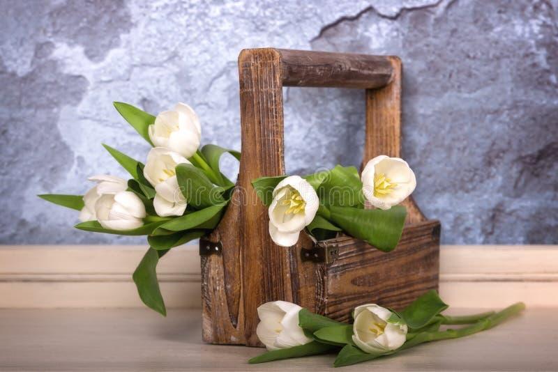 在一木trug的白色郁金香 免版税库存照片