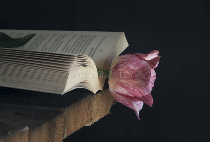 在一本开放书的桃红色郁金香在低灯 库存图片