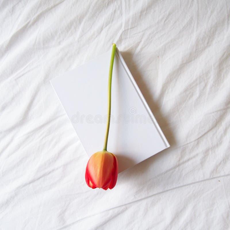 在一本白皮书的可爱的红色郁金香 库存图片