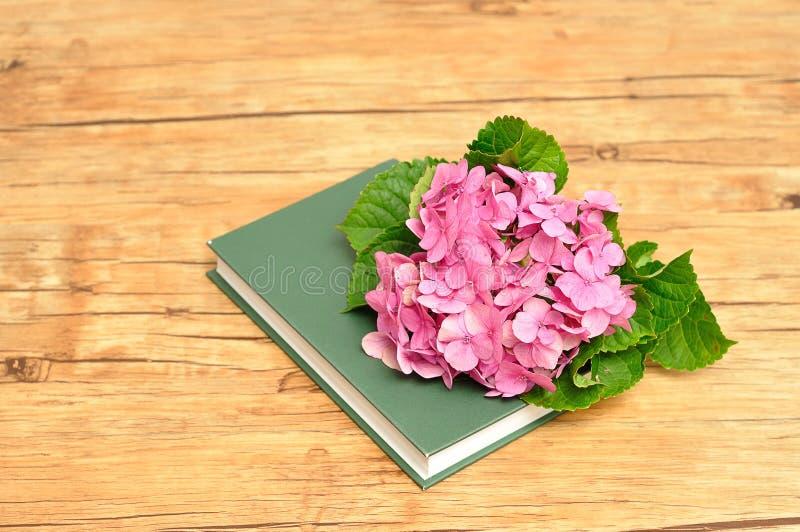 在一本绿色故事书顶部的桃红色八仙花属 图库摄影