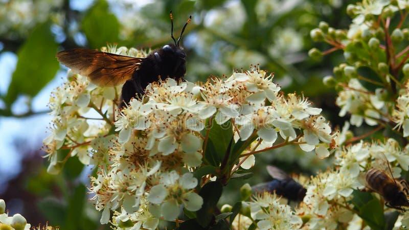在一朵花的一只蜂在庭院里 库存照片