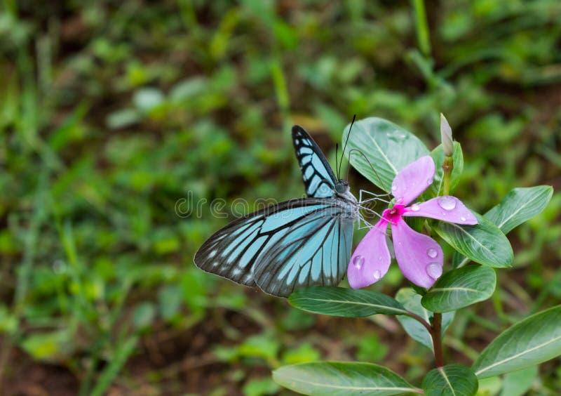 在一朵花的蝴蝶与水下落 免版税库存照片