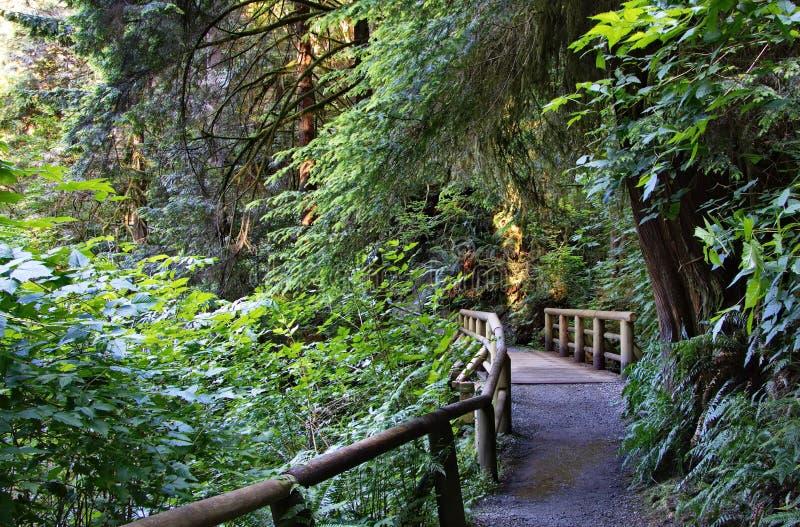 在一条供徒步旅行的小道的木桥 库存照片