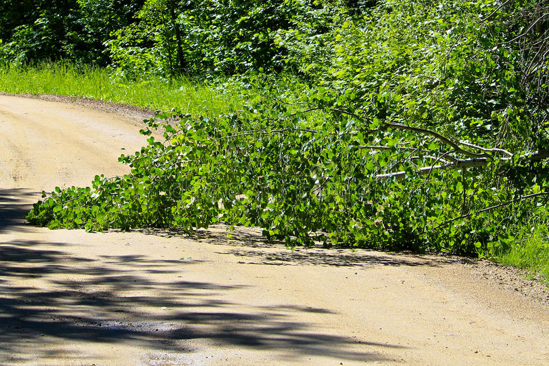 在一条农村路中间的下落的树 库存图片