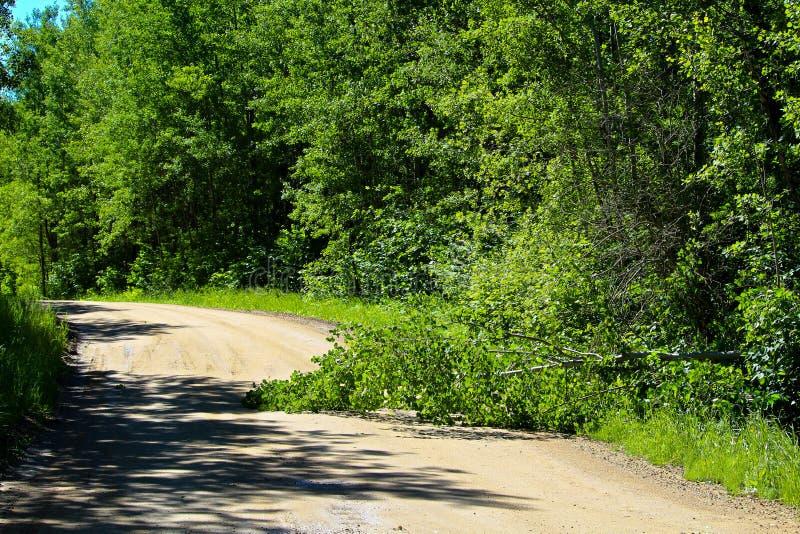 在一条农村路中间的下落的树 免版税库存照片