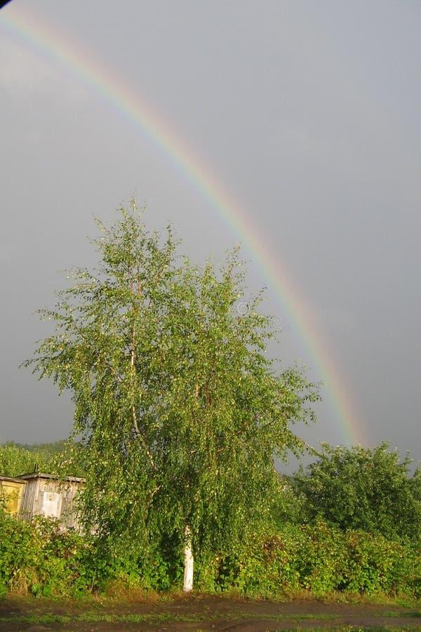 在一条农村路的偏僻的绿色桦树在雨以后 彩虹 库存图片
