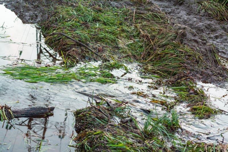 在一条土路的小河在乡下肮脏的路和水坑 农村泥极端方式  免版税库存图片