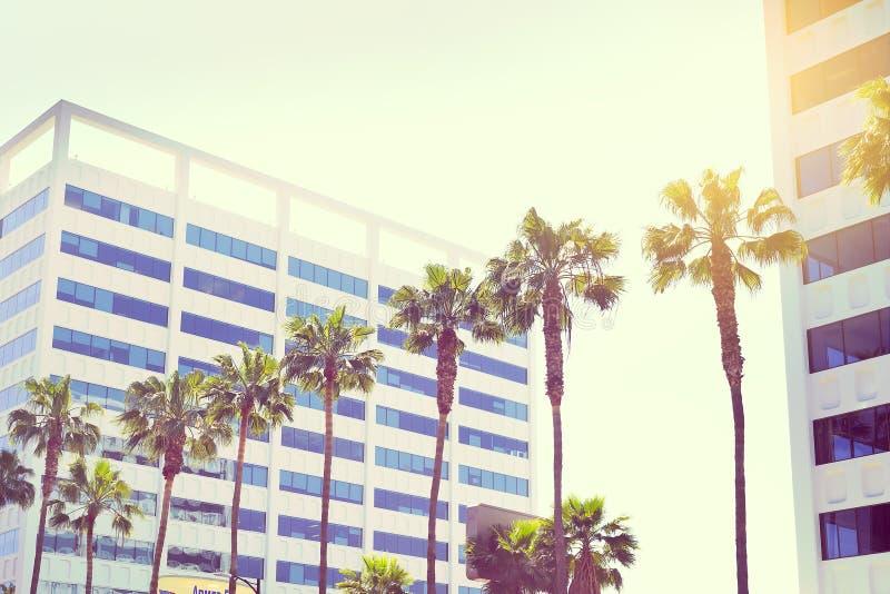 在一条大道好莱坞的棕榈在sunli的大厦背景 库存图片