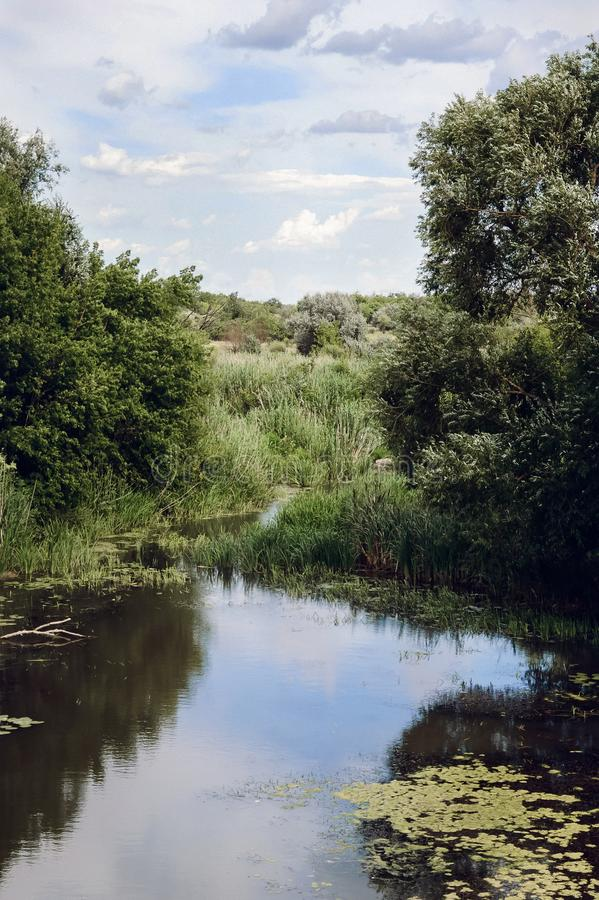 在一条小河的河岸的树 免版税库存图片