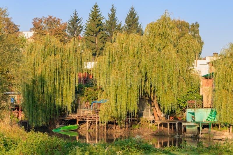 在一条小河的陡峭的河岸的老木码头长满与高老杨柳在晴朗的秋天早晨 河横向 免版税图库摄影