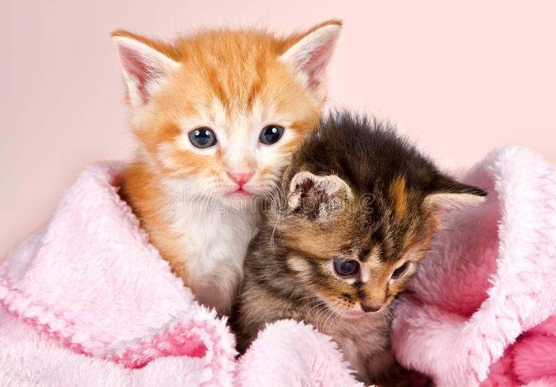 在一条桃红色毯子包裹的小小猫 库存图片