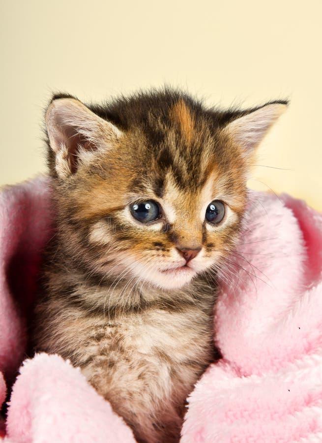 在一条桃红色毯子的好奇小的小猫 图库摄影