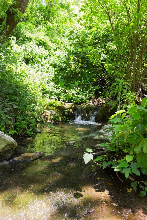 在一条森林小河Kziv的小瀑布在以色列的北部 免版税库存图片
