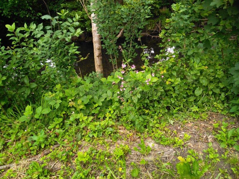 在一条河的边缘的叶子在一个夏日 免版税库存照片